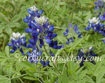 Bluebonnet seeds TX state flower great housewarming gift for gardens