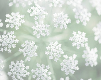 Nature Photography -  Queen Anne's Lace, Mint Green and White Floral Photograph, Botanical Home Decor, Large Wall Art