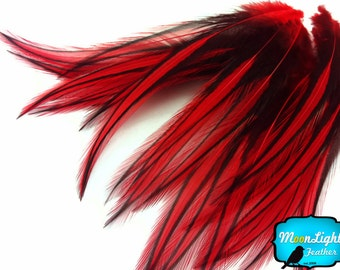 Red Laced Pointy Feathers, 10 Pieces - RED Laced Long Rooster Cape Feathers : 2203