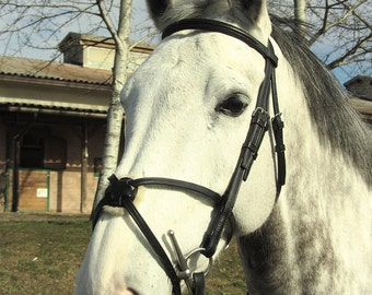 Horse bridle with grackle noseband