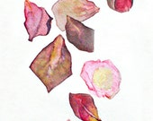 Notes From the Field, Rose Petals, watercolor painting, dusty pink, dried leaves,