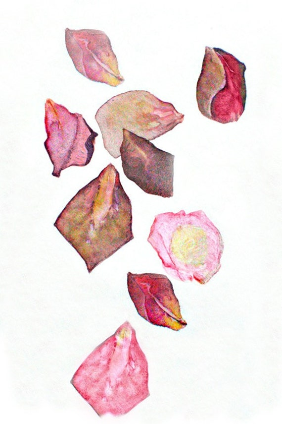 Notes From the Field, Rose Petals, watercolor painting, dusty pink, dried leaves, roses, rose petals painting