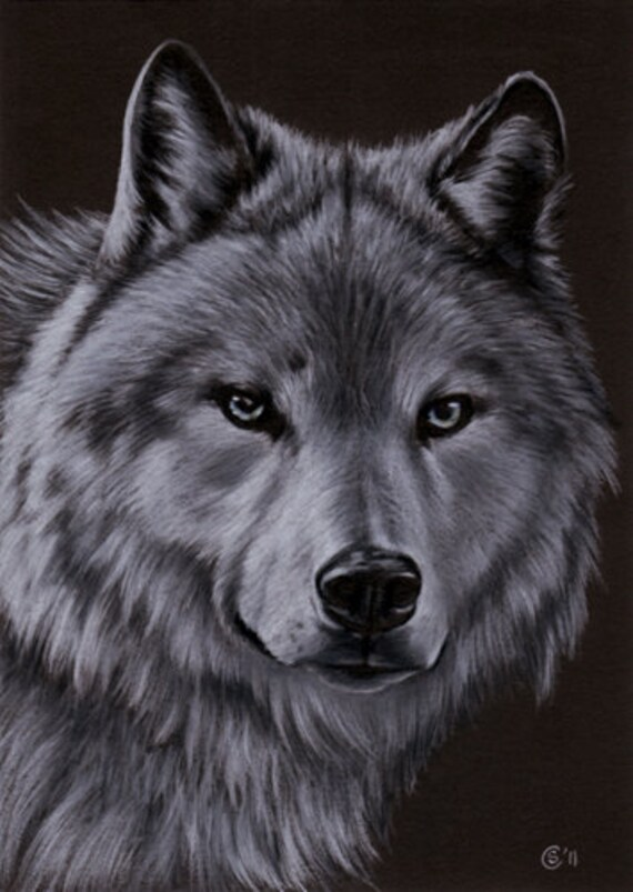 Items similar to wolf 3 dog puppy canine loup pencil for Lupo disegno a matita