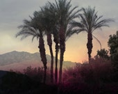 Desert Landscape with Palms at Sunset 8x8
