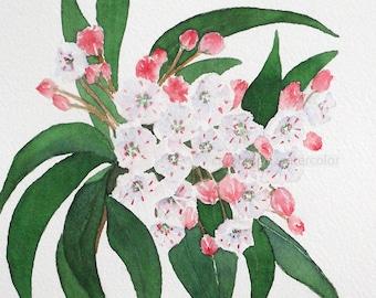 mountain laurel watercolor giclee print