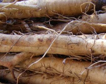 Salsify, Mammoth Sandwich Island Salsify Seeds - Heirloom with Oyster Flavor