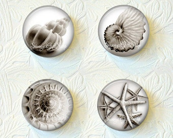 Shell Magnets, Ocean Magnets, Kitchen Magnets,Nature Magnets, Magnet Set of 4,  Buy 3 Get 1 Free  136-MS