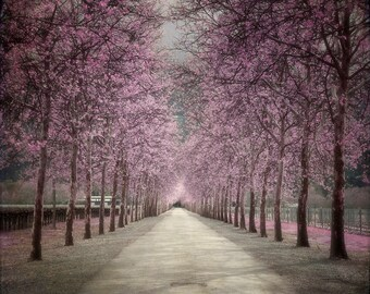 Vineyard : surreal photography napa valley lavender black gray tree wine country tintype home decor 8x8 10x10 14x14 16x16 20x20 24x24 30x30