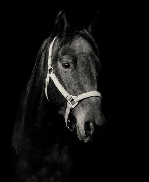 Black Horse Photography Black Background Dark by ApplesAndOats