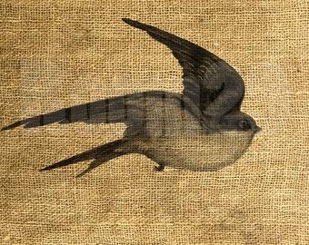 INSTANT DOWNLOAD - Flying Bird Swallow Vintage Illustration - Download and Print - Image Transfer - Digital Sheet by Room29 - Sheet no. 919