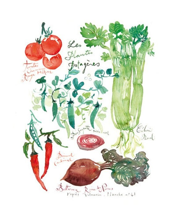 Kitchen Art Vegetables Print Botanicals Kitchen Art: Plantes Potagères Vegetable Poster Botanical By Lucileskitchen
