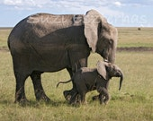 Baby Elephant Nursery, BABY ELEPHANT and MOM Photo, Nursery Art Print, Mother and Baby Animal Photograph, Wildlife, Safari Nursery Art