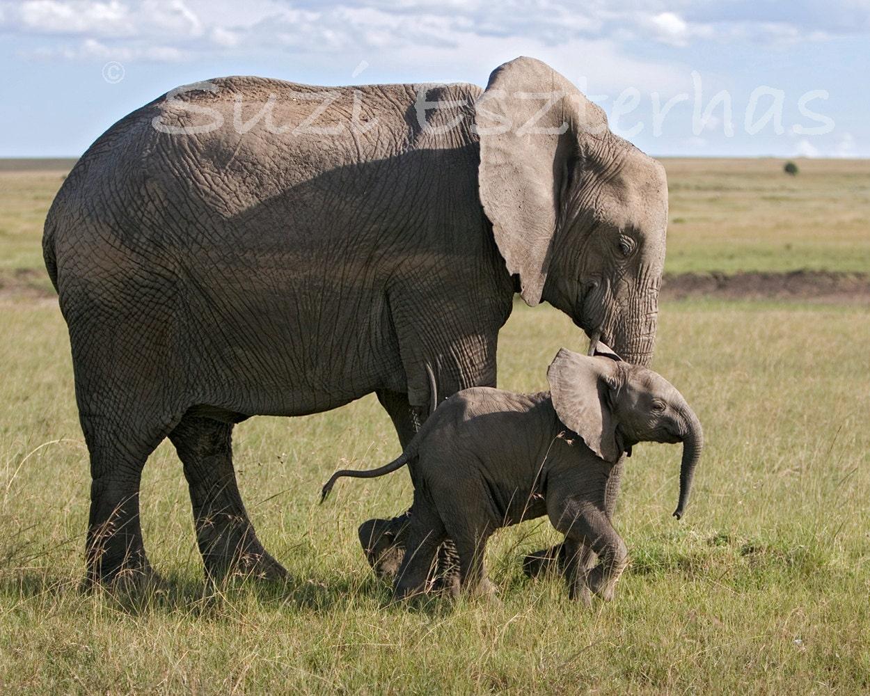 Baby Elephant Nursery Baby Elephant And Mom Photo Nursery
