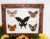Butterflies in Folk Art Wood Frame