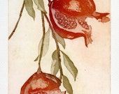 Two Pomegranates, Fine Art Etching