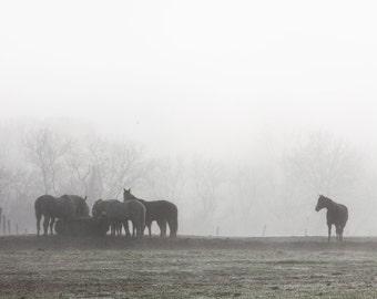 Horses in the Fog Print