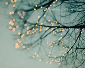 "Tree Lights Photography - (Blue, Ivory, Black) - Holiday Photography, Tree, branches, Home Decor - ""Lights"""