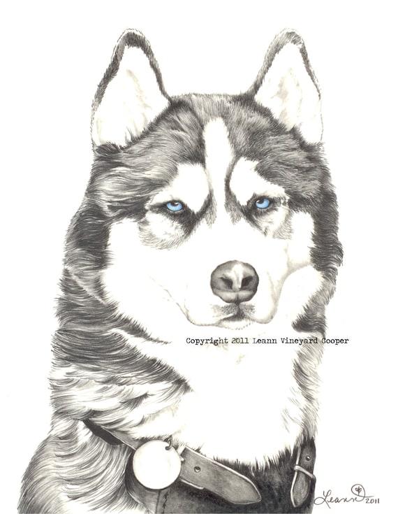 Husky Dog Drawing Husky Drawing Print Quot Husky