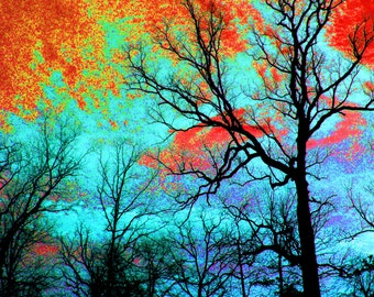 Surreal Sky and Trees Fine Art Photography / Landscape / Winter Trees 8 x 10