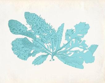Vintage Teal Sea Weed Kelp Coral Print 8x10 P261