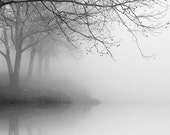 black and white photography, trees, fog, landscape, nature, WINTER TREE REFLECTIONS_ 8 x 10 print - NicholasBellPhoto