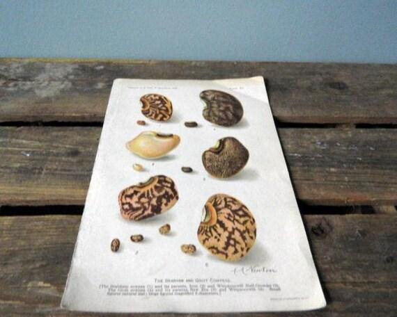 Vintage Peas Book Print  Home Decor Agriculture Vintage Kitchen Home Decor Mothers Day Repurpose