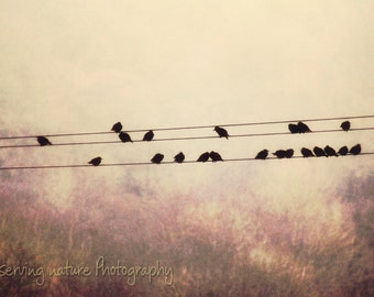 Starling Song  Fine Art Photography Download
