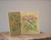 vintage bird paintings, hand painted bird art, wildlife art, original oil paintings