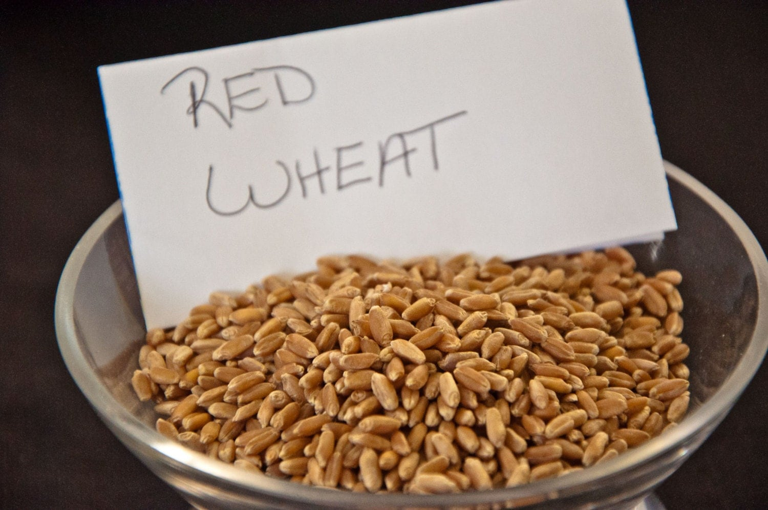 32 Pounds Hard Red Winter Wheat Berries