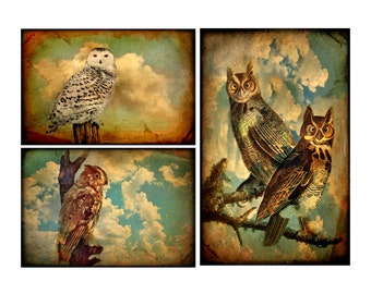 owls, Set of 3, 8x10, owl prints , stormy, clouds, sepia, rustic, bird, bird lover