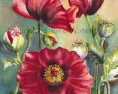 "Notecard ""Poppies"" by Sandi McGuire"