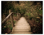 Nature woodland photograph print, rustic forest wall decor - Elven Pathway - warm earth tones, green, brown, autumn, fall