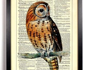 Cute Little Owl, Home, Kitchen, Nursery, Bath, Office Decor, Wedding Gift, Eco Friendly Book Art, Vintage Dictionary Print 8 x 10 in.