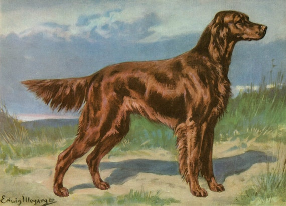 Irish Setter Vintage Dog Print, Edwin Megargee Artwork,  1940s Vintage Dog Picture Illustration, Hunting Dog Portrait Original