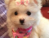 Tiny Puppy Fashion Love Bandana and Bow, You choose fabric, Available Personalized