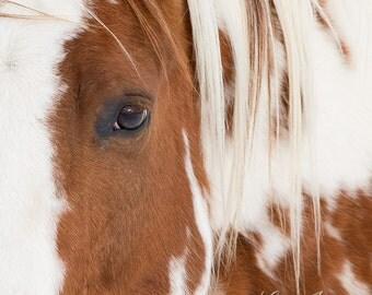 Chief Comes Close - Fine Art Horse Photograph - Horse - Fine Art Print
