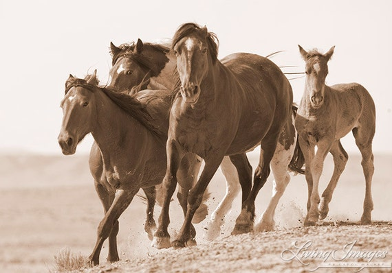 Warbonnet Moves His Family - Fine Art Wild Horse Photography