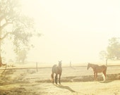 Horses in Morning Light. Country Chic. Fine Art Photography. Australian Landscape. Home Décor. Dreamy. Size A4