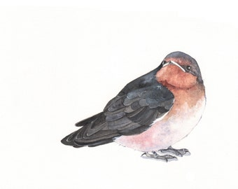 Swallow watercolor painting- print of watercolor painting- A4  print wall art print - bird art print