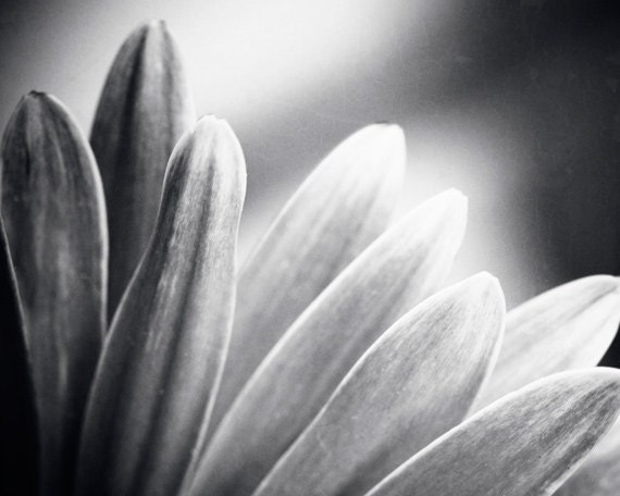 Black And White Flower Photography Prints Black And White Photography