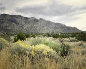 Sandia Mountains Photography Print 11x14 Fine Art New Mexico Spring Wildflowers Southwest Landscape Photography Print.