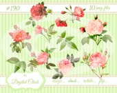 Digital Clipart, instant download, Vintage Victorian Pink Rose Images, leaves, rosebuds buds clip art vintage illustration--png files 190