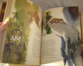 Animal Folk Tales by Barbara Ker Wilson and Mirko Hanak HTF folktales children's book hardback 1971