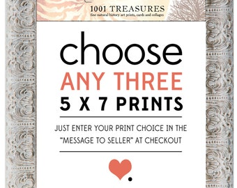 Special - Any 3 Prints of Your Choice to be Size 5 x 7 Inch