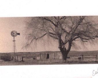 ACEO - Lone tree photo