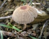 Mushroom photograph, woodland forest print, nature photography, home decor, wall art, Tiny