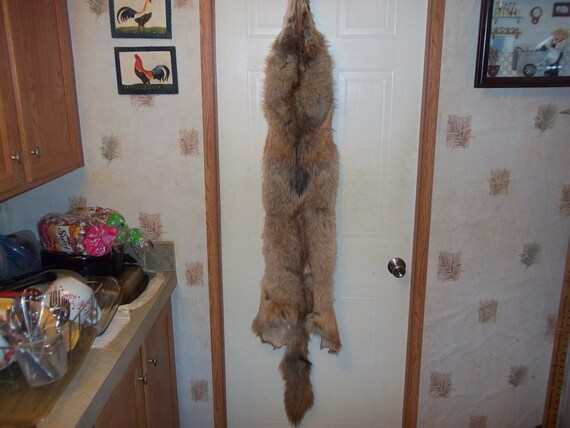 Tanned Red Coyote Fur Pelt Real Animal Skin Part By Boomer2563