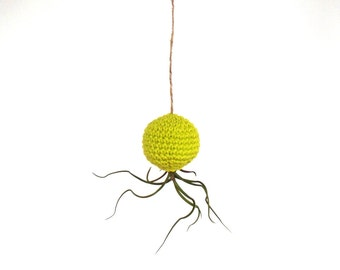 Urban Living - Living Air Plant in Hanging Colorful Pod