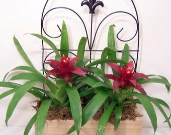 Planter Wood Box DIY Fleur de lis Decor NO PLANTS