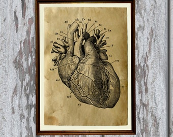 Heart Anatomy print on old paper Antiqued decoration AK19